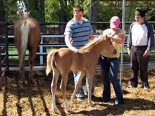 As part of Equine therapy, students help to gentle and imprint baby horses